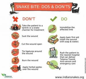 Snake Bite Do's and Dont's