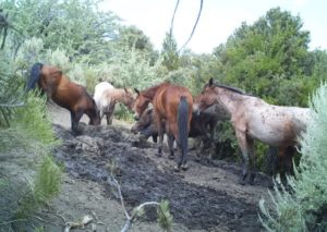 Horses on the Caliente Complex