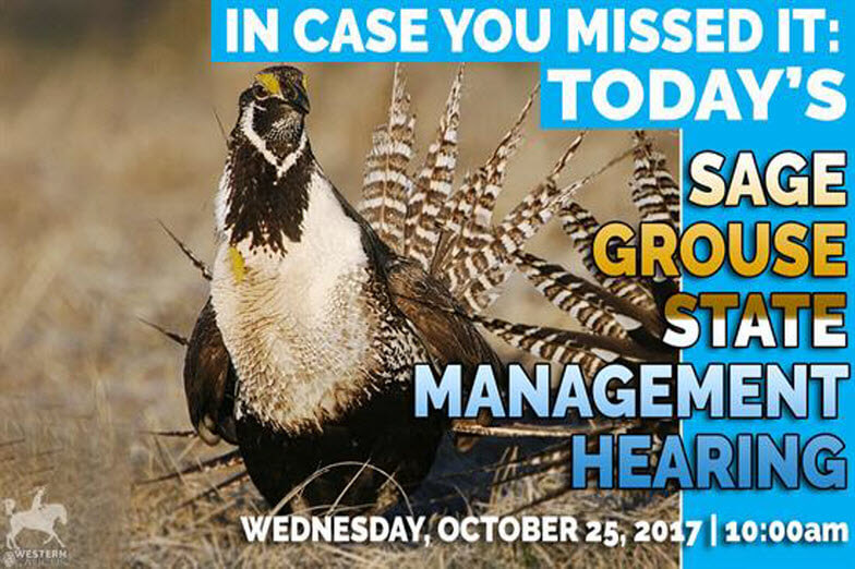 House Management Meeting on Sage Grouse
