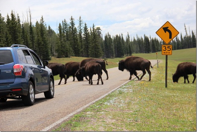North Rim Buffalo Road Crossing