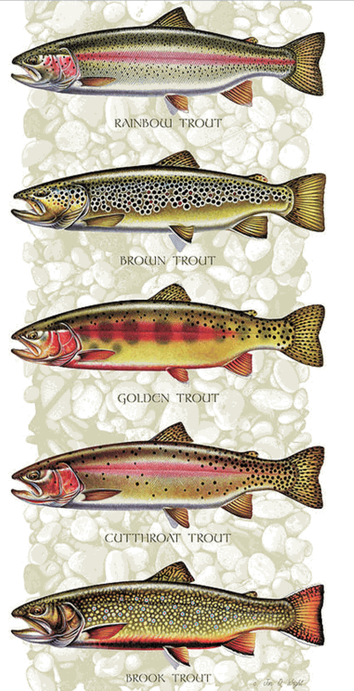 Habits And Habitat Of Trout Don Mcdowell