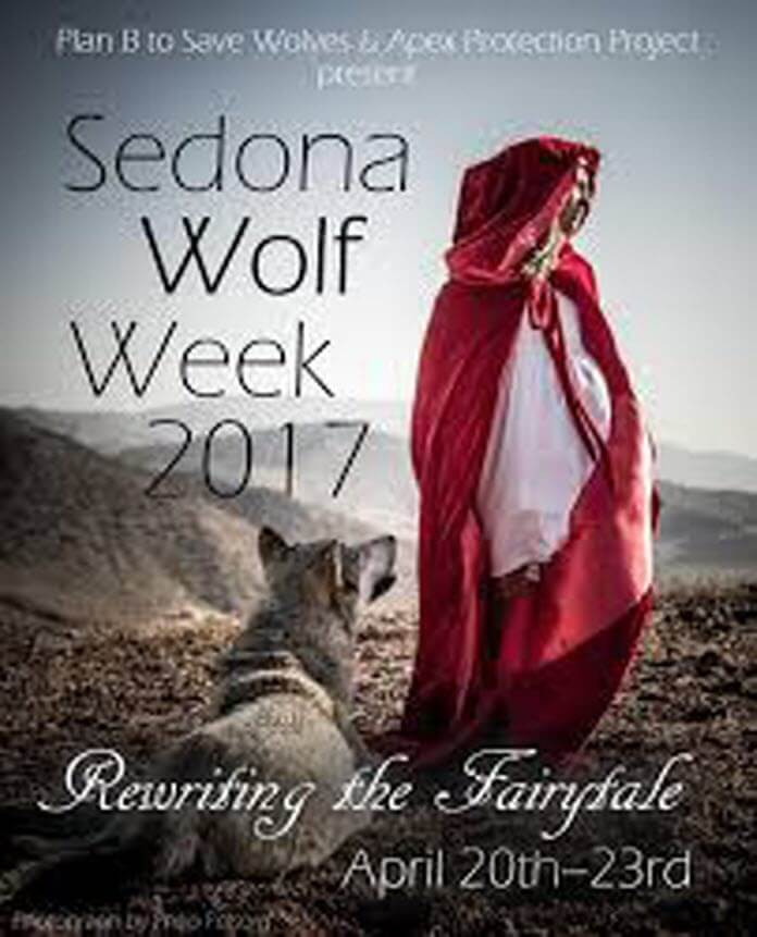 Wolf Week in Sedona