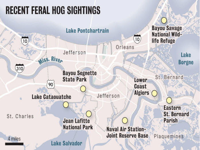 Feral Hog invasion into the Louisiana area