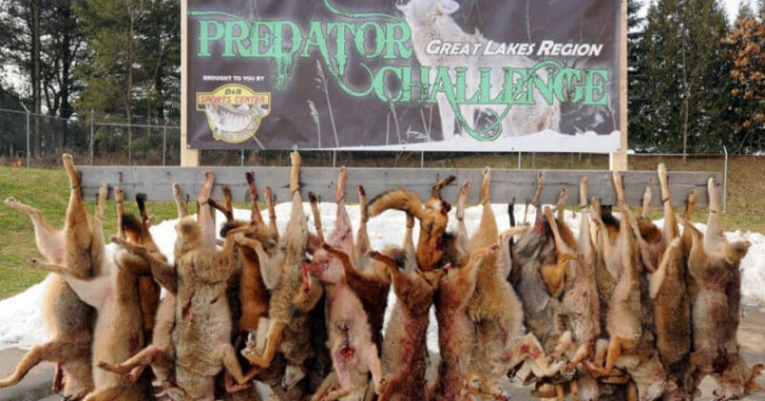 Great Lakes Predator Challenge