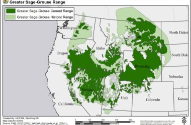 Sage Grouse Range
