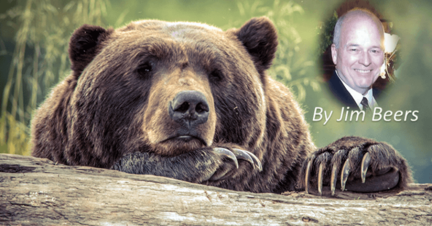 Fascination with Bears