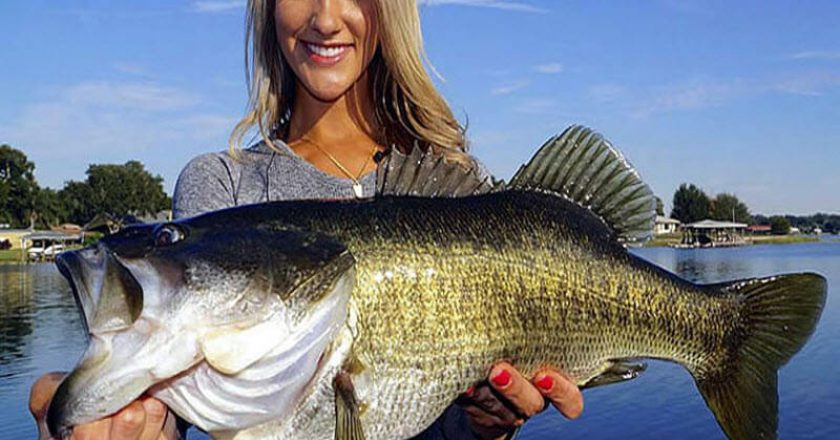Largemouth Bass 800