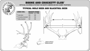 Boone & Crockett Scoring