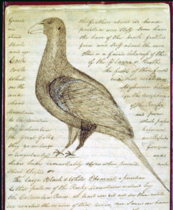Sage Grouse 5 Lewis & Clark Notes