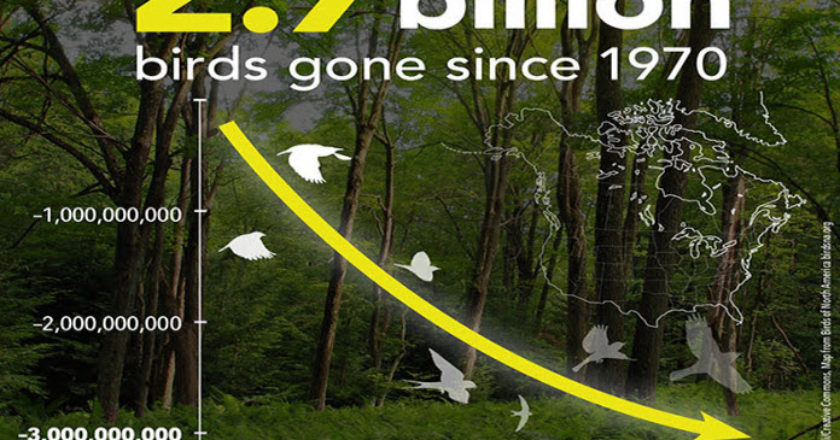 2.9 Million Birds Lost