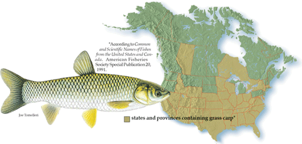 Grass Carp Locations