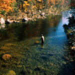 Fly Fishing in Maine: The Top Species – Flies and Times