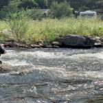 Fly Fishing the Big Thompson River